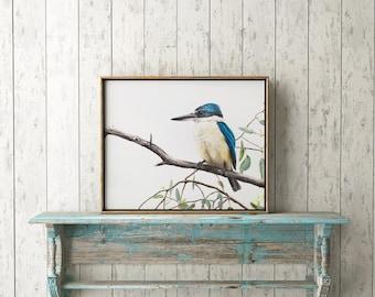Sacred Kingfisher Print - A3 Print, Australian Bird Print, Kingfisher Prints