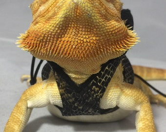 Dragon Wings and Things Adult Bearded Dragon Harness/ Leash