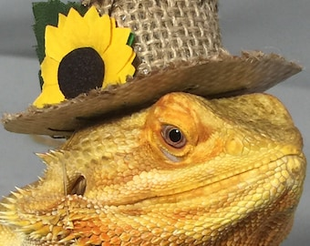 Dragon Wings and Things Bearded Dragon Scarecrow Hat