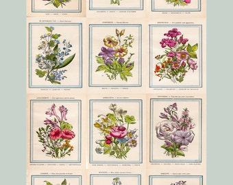 The Vintage French Flower Shop- Ephemera -Clip Art - Digital Collage Sheet - Printable - Instant Download