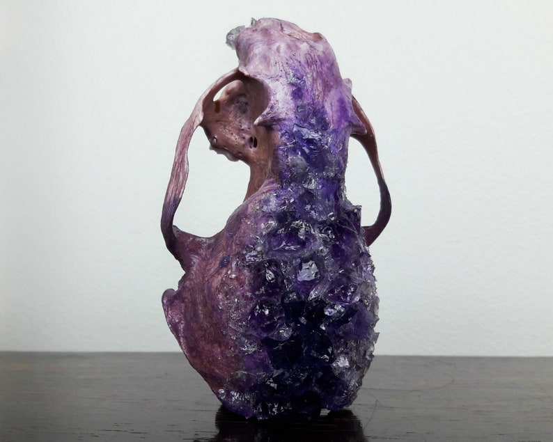 gothic decor curiosities and oddities taxidermy collection amethyst crystal skull witchy decor mature crystallized skull real animal bones