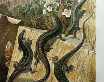 1892 antique wall lizards COLOR LITHOGRAPH, vintage original reptiles engraving print,reptile animal natural history plate, oddity  lizard .