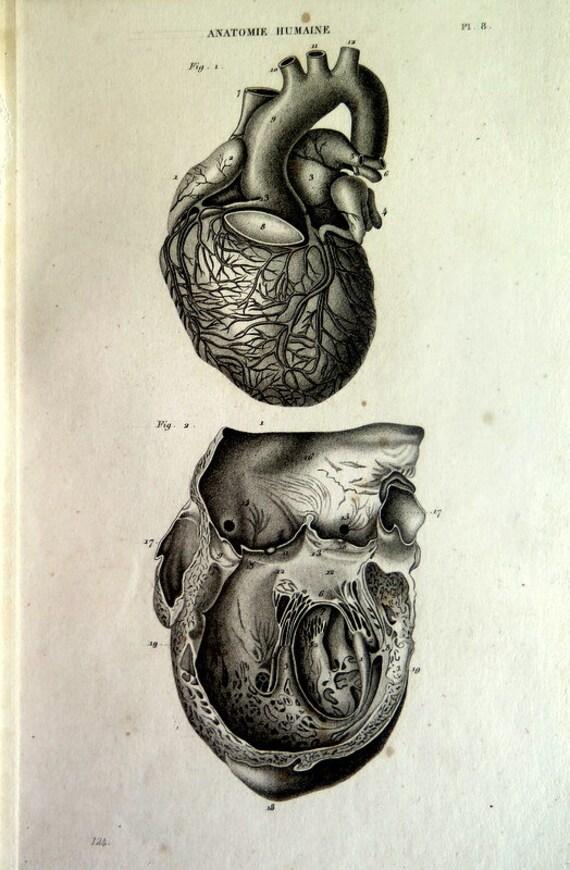 Herz-Gravur. 1852 antike menschliche Anatomie-Druck seltene