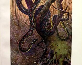 1920 Strange SNAKE engraving,  antique Paradise tree snake  print, VINTAGE reptile lithograph plate, Herpetology illustration,  snakes.