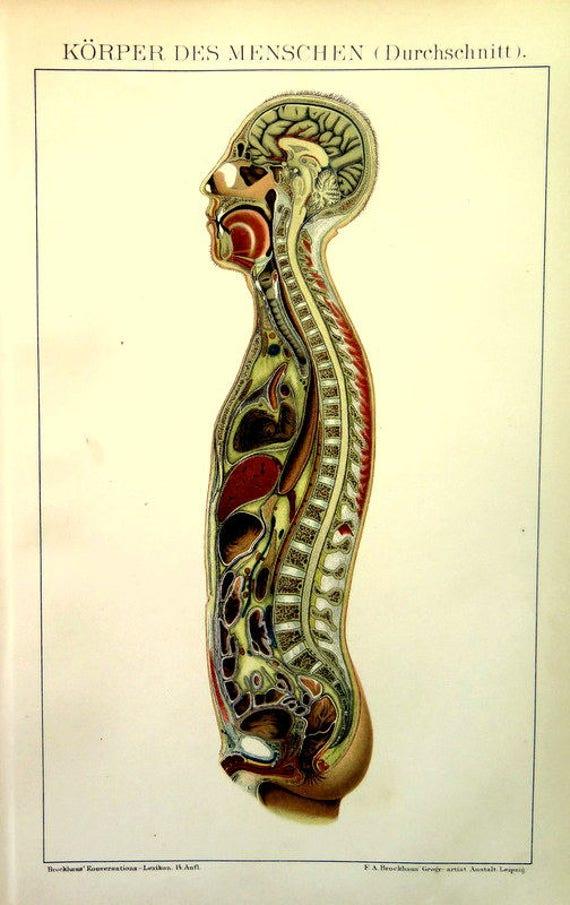 1898 antike anatomischen menschlichen Druck Anatomie Körper | Etsy