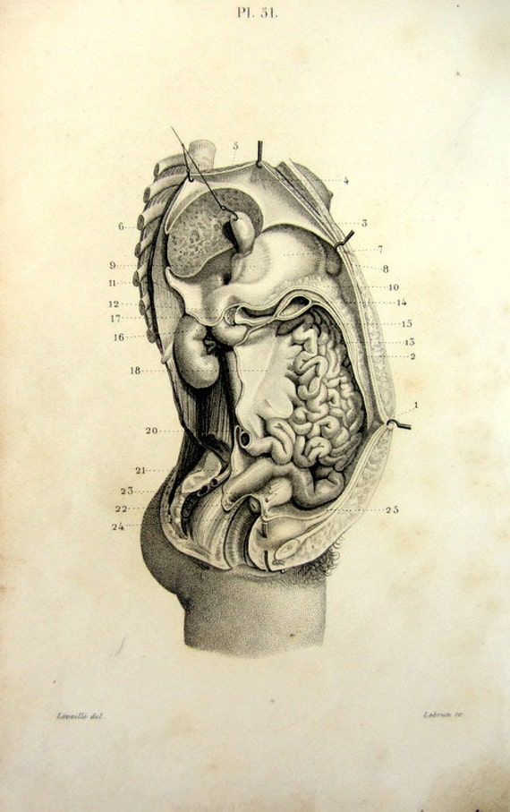 1846 antike Anatomie Bauchfell Druck Gravur der inneren | Etsy