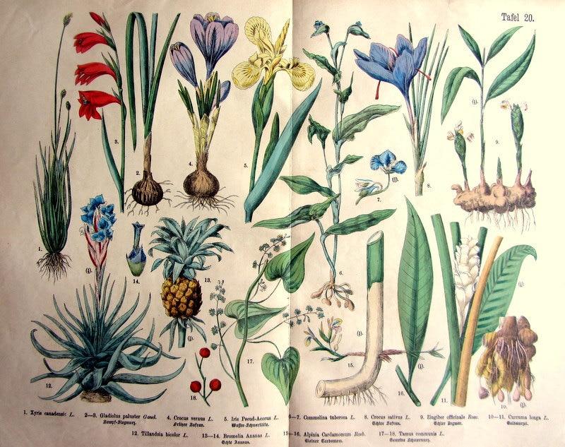 1895 verschiedene arten von pflanzen und blumen gravur antik etsy