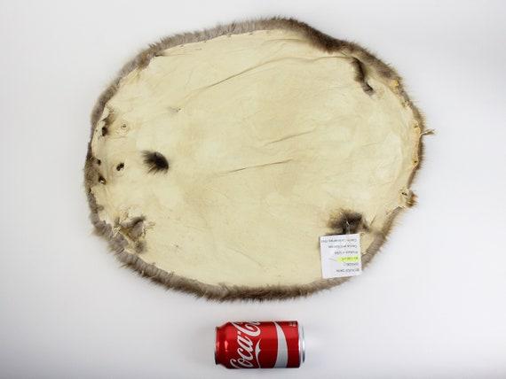 L18 Medium Beaver Skin #1#2 grade 50-1-M-G3230 Gallery