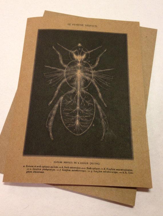 Nervensystem von einer Biene-Notiz-Karte Le Systeme Nerveuxe