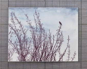 Black bird art magnet ~ small fridge magnet ~ art gift for bird lover ~ blackbird kitchen decor