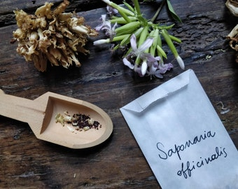 Soapwort herb seeds traditional Italian plant for washing fibers and hair. Natural vegetable detergent for silk and wool ecofriendly laundry