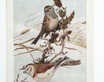Vintage Print Birds North America Color Book Illustration Winter Scene - 1950s