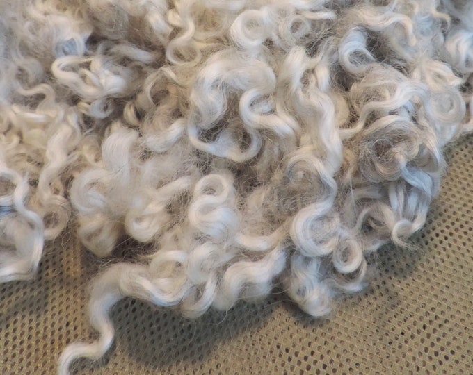 """Gotland, Colored Wool Fleece, Light Shades of Silver Gray, 1 oz,  Lightly Washed, 4-5"""" Length, Curly Locks, Felting, Spinning, Gnomes,"""