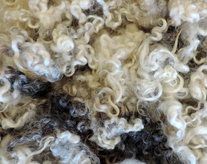 "Shetland X Leicester, Curly Locks, Washed, Wool Fleece,  Silver, Gray, White, 3 1/2"", Doll Hair, Rehair, Beards, Add Ins, Art Batt, Felting,"