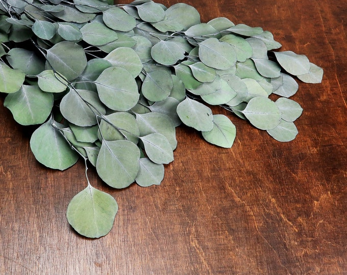 DIY bouquet preserved seeded eucalyptus silver dollar populus bunch leaves craft supply greenery floral wedding real plant boho sage green