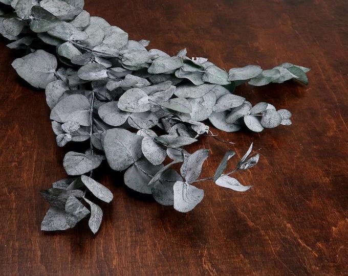 Preserved eucalyptus cinerea bunch
