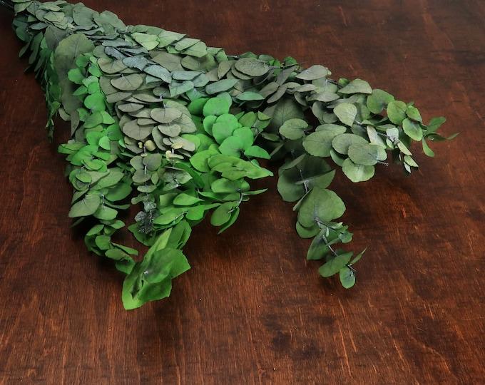 Preserved eucalyptus stuartiana bunch