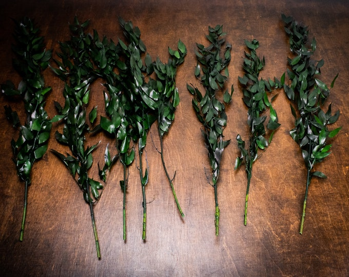 DIY bouquet preserved Italian Ruscus bunch, preserved leaves, craft supply, greenery floral wedding real plant boho dark green