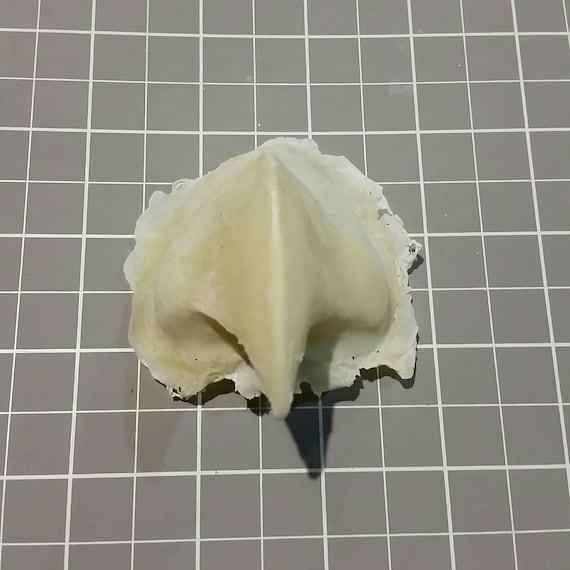 UNPAINTED Bird Beak Foam Latex Prosthetics