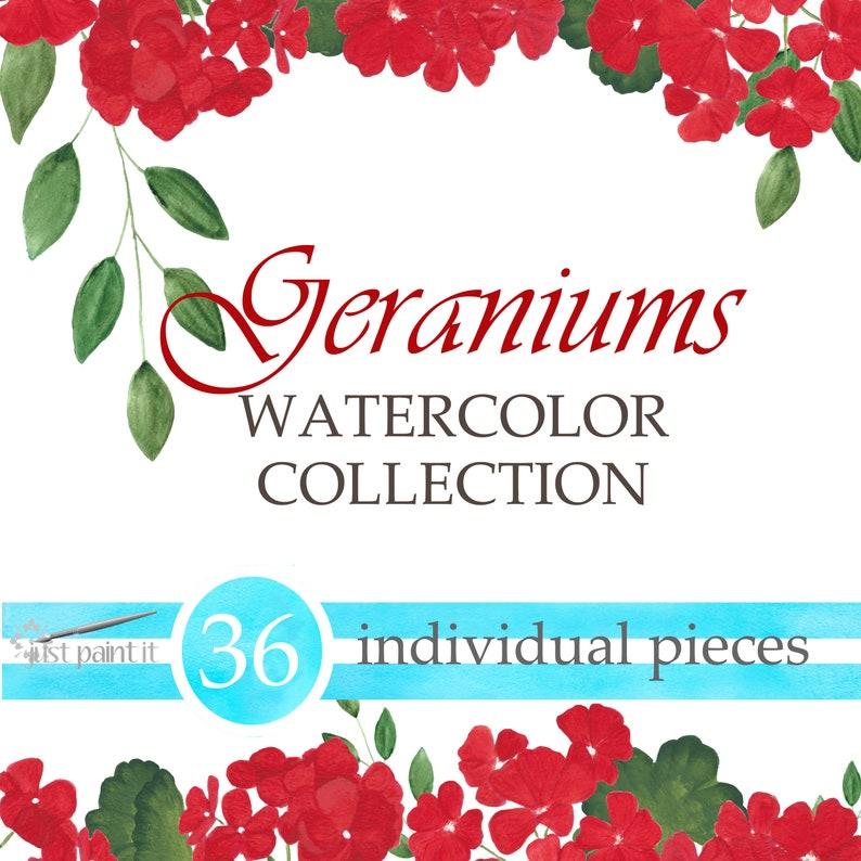 Geraniums Watercolor ClipArt image 0
