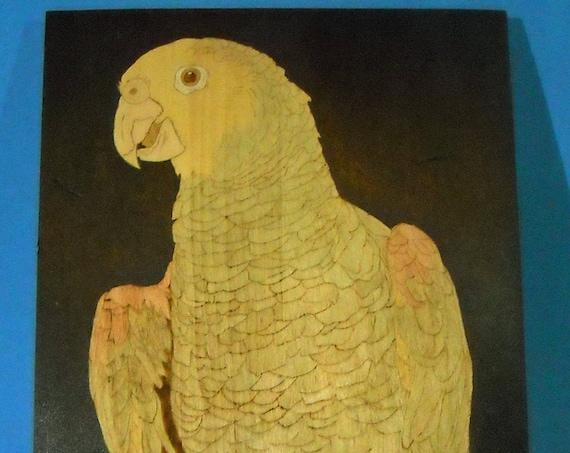 Beautiful Double-yellow head Amazon Parrot Pyrography Portrait