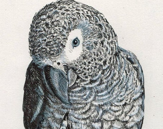 African Grey Parrot Foot Up 5x7 print on quality paper. From original pen & ink by Sally Blanchard, a world renowned parrot expert | artist