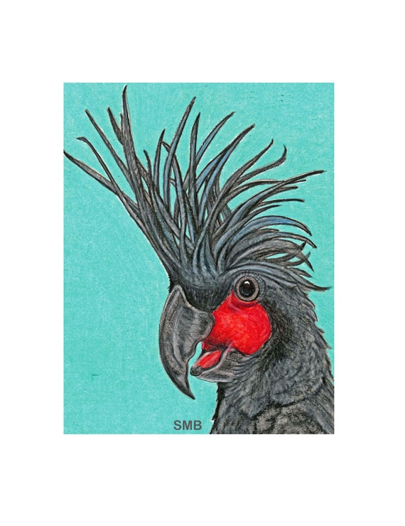 Palm Cockatoo Print on High Quality Print on Linen of an Original Prismacolor Pencil Drawing by Sally Blanchard