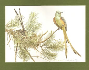 Scissortail Flycatcher Limited edition Print by Well known Wildlife and Bird Artist and Illustrator David Plank 22/500