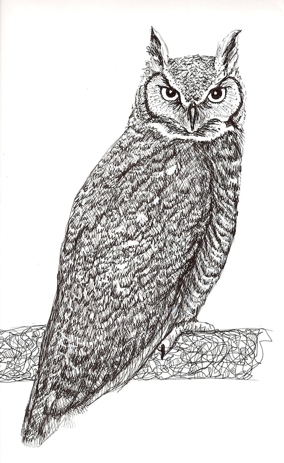 Sally Blanchard Original Pen and Ink Drawing of a Great Horned Owl
