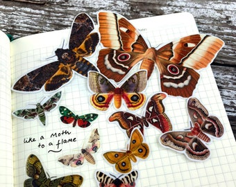 Moth Stickers, Butterfly Stickers, Transparent Stickers, Planner Stickers, Scrapbooking, Animal Sticker Pack