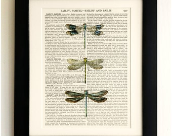 FRAMED ART PRINT on old antique book page - 3 Dragonflies, Insect, Vintage Upcycled Wall Art Print Encyclopaedia Dictionary Page