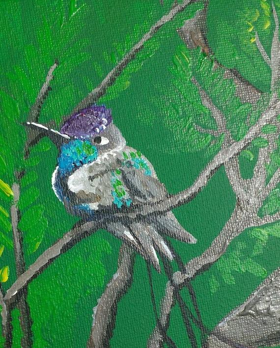 Spatuletail Hummingbird