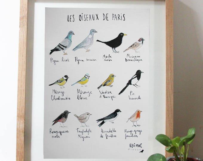 "Large A5 card / poster ""Paris birds"" - Illustration Watercolour & ink - decoration"
