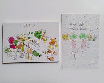 Seasonal fruit and vegetable calendar - planting menu (aromatic herbs) - original illustration