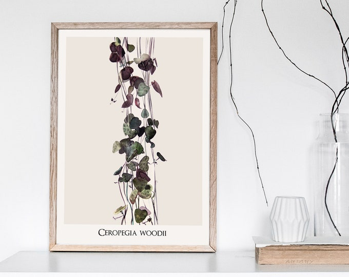 Ceropegia Woodii Botanical Print with name