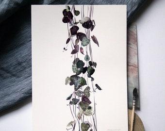 Ceropegia Woodii Botanical Print, String of Hearts Print, Nature Print, Plant Art, Plants Prints Wall Art, Leaves Print, Leaf Watercolor