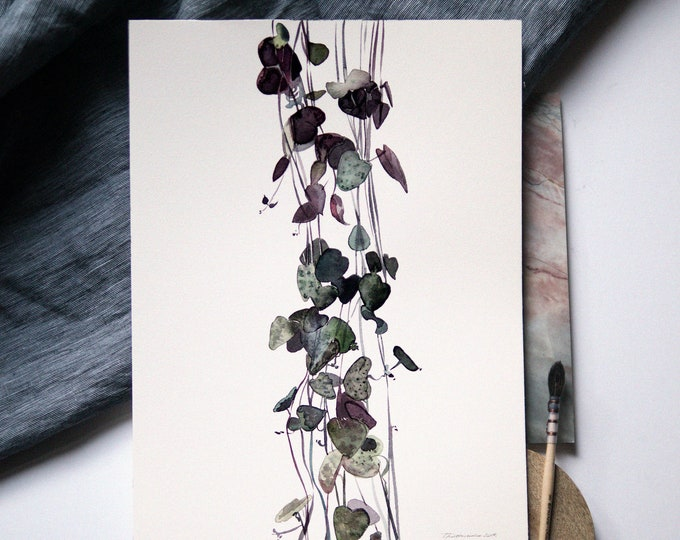 Ceropegia Woodii Print