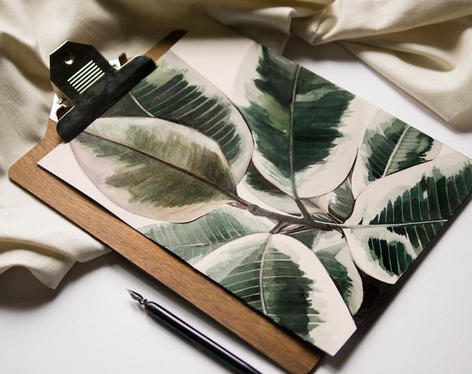 Ficus Elastica Variegata Botanical Print