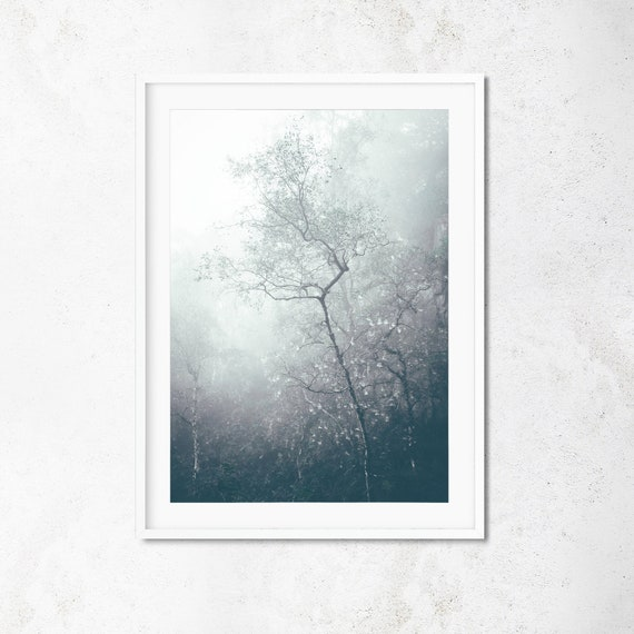 Misty Woodland Print - Silver Birch Nature Tree Photography Cobweb Leaves  Branches Wall Art Peak District Hathersage Sheffield