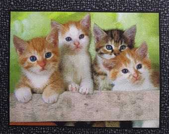 21 SOMEBODY TO LOVE KITTENS CATS QUILTING FABRIC PANEL NO