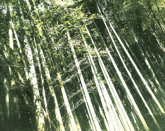 Bamboo Abstract -Forest Landscape, Trees Photograph, Monochrome Green, Japan Print, Zen Nature, Green Scenery, Nakasendo Way, Light Shadow