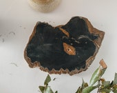 Petrified Wood Trivet / Stone Serving Board / Cheese Board / Spring Decor Table Setting