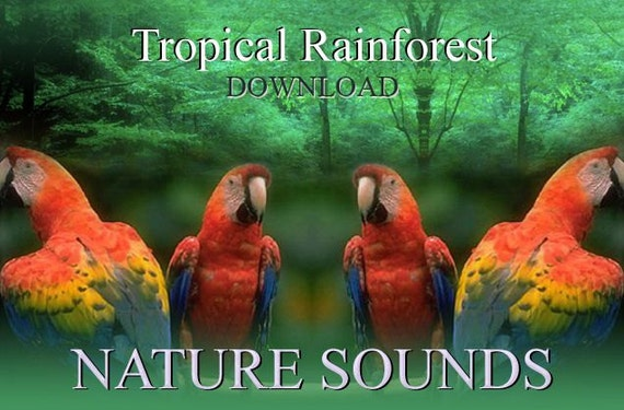 Items similar to Tropical Rainforest Nature Sounds mp3