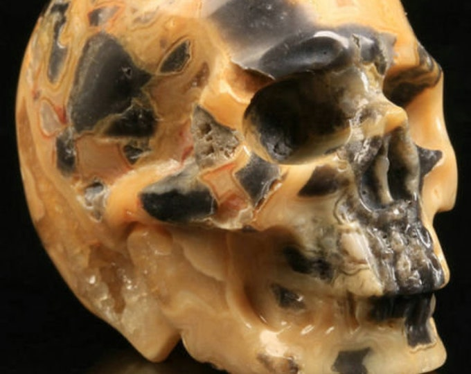 Crazy Lace Agate Carved Skull  #013