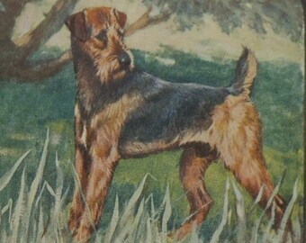 Antique AIREDALE TERRIER DOG Print from 1909 by Vernon Stokes - Dog Art - Dog Print - Terrier Dog Art - Matted - Ready to Frame