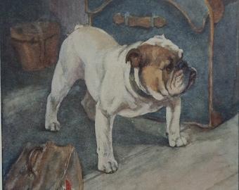 Antique BRITISH BULLGOG DOG Print from 1909 by Vernon Stokes - Dog Art - Dog Print - Bulldog Dog Art - Travel Bag - Matted - Ready to Frame