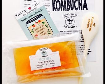 """LARGE 4"""" Kombucha SCOBY + 1.5 Cups Starter Tea + etched wooden brew spoon + detailed step-by-step instructions"""