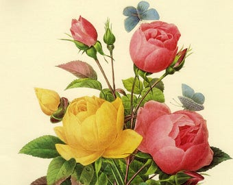 VINTAGE REDOUTE Pink Chinese ROSE Bouquet Illustration 1985 Fruit and Flower Print - Perfect Gift for Wedding, Birthday, Graduation (127)