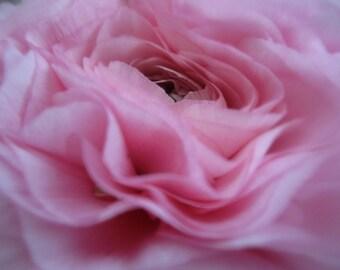 Pink Fuzzy Flower