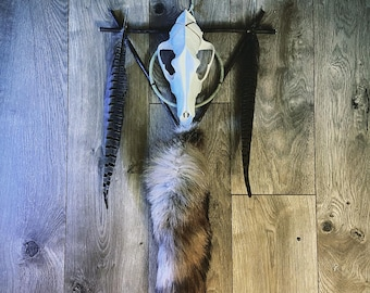 Growth | Coyote Skull Wall Hanger